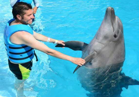 Ausflug zur Delphin Show ab Makadi Bay