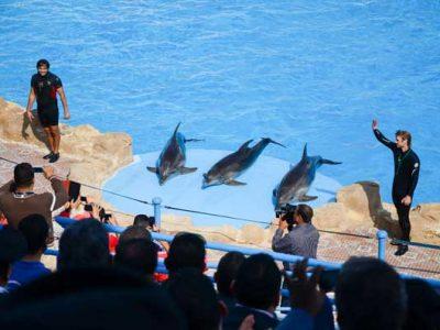 Ausflug zur Delphin Show ab Soma Bay