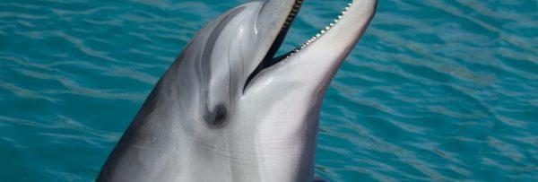 Hurghada Delfin Schwimmen und Schnorcheln