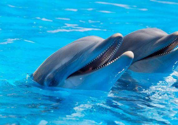 Mit Delfinen Schwimmen und Schnorcheln in Hurghada