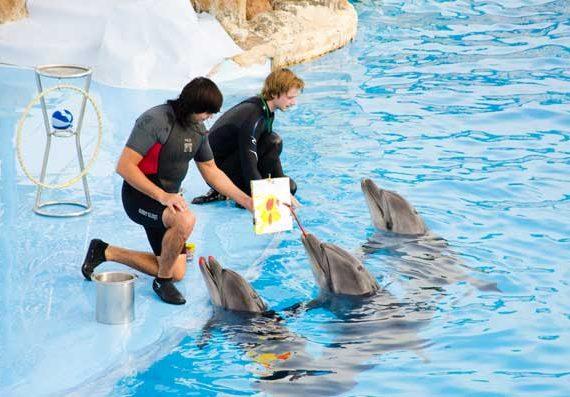 Ausflug zur Delphin Show in Hurghada